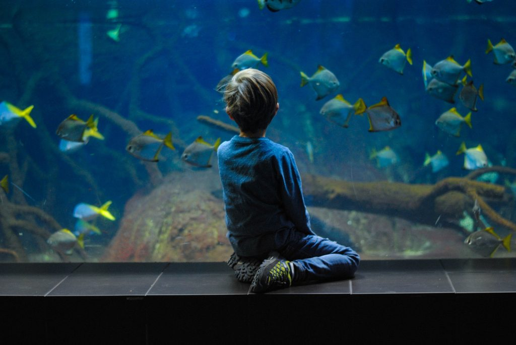 Kind vor Aquarium
