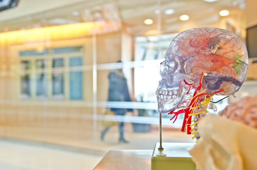 Künstlicher Menschenkopf mit Nervenbahnen